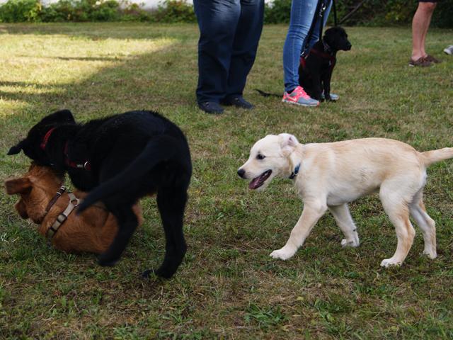 hundeschule-welpenstunde