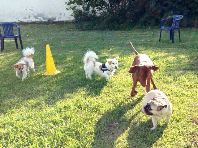 Kleinhundegruppe-hundeschule